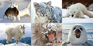 Which ski-field animal are you?